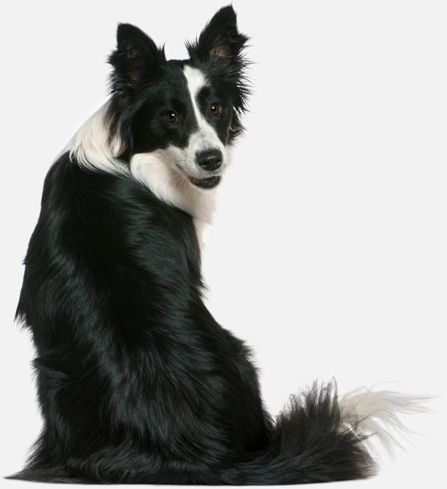 dog-turn